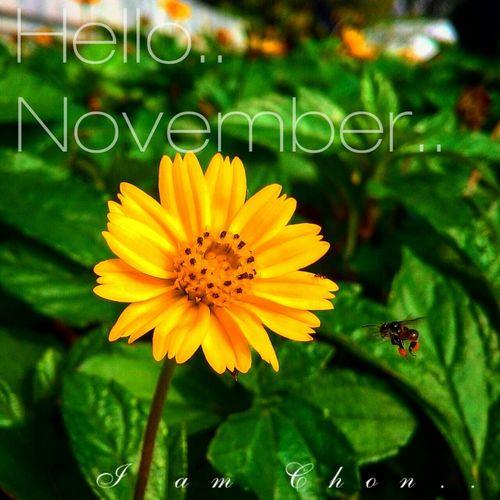 Hello November Flower Natural Beautiful Bangkok Thailand.