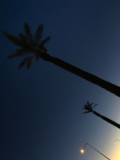 Palm Tree Tree Low Angle View Silhouette Clear Sky Blue Nature Tree Trunk No People Beauty In Nature Moon Outdoors Scenics Sky Night Dawn No Filter No Edit/no Filter Portugal Algarve Lookingup Streetlights The Traveler - 2018 EyeEm Awards