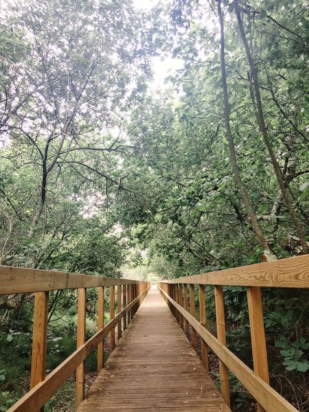 The Architect - 2017 EyeEm Awards Tree Wood - Material Nature Forest Footbridge Growth Beauty In Nature Day Tranquility The Way Forward No People Outdoors Wood Paneling