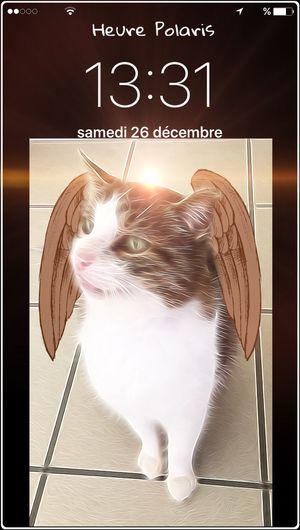 13H31 c'est un Ange MIMINE 😽😽😽😸😻 HEURE POLARIS Chat😻 Mon Ami Le Chat THESE Are My Friends Cat😻 Cat♡ Cat Chat Time Heure Clock Temps Hour