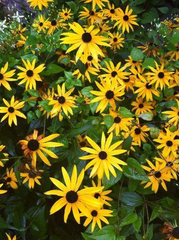Daisy Daisy Flower Daisy ♥