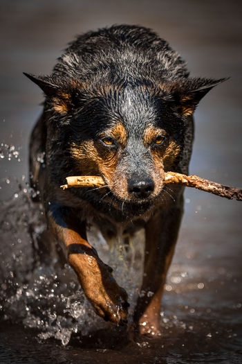 Portrait of dog in water
