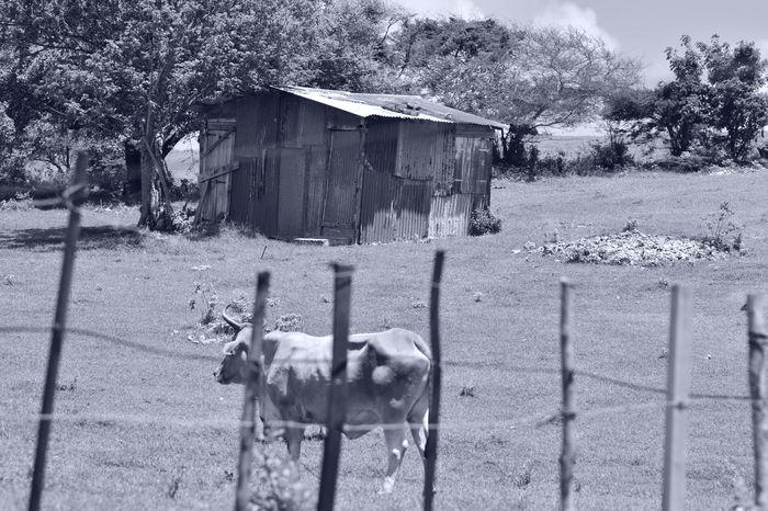 Créole house 👌👌👌 Paysage Hello World First Eyeem Photo Urbanvybz Photography Caribbean Guadeloupe Gwada  Nature WestIndies Creole House Casecreole