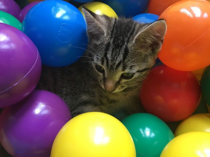 Cat amidst colorful easter eggs