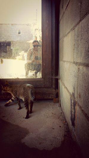 Cats Rosita Tras El Cristal Reflection