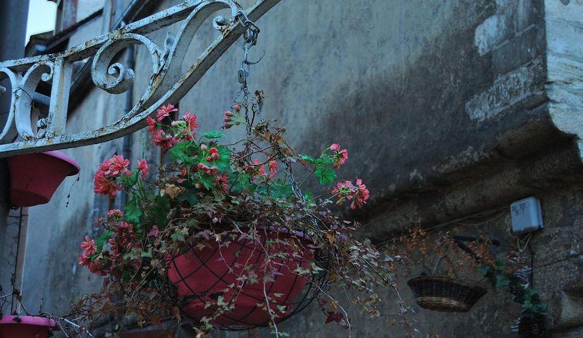 Clamecy Console Ferronnerie Fleurs Floral Flower Flowers Jardinière No People Outdoors Plant Ruelle