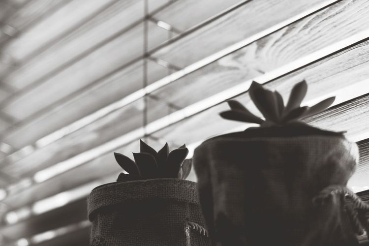 Macro Succulents A Fleshy Plant Light And Shadow Plant Blinded By The Light Blinds Backgrounds Blackandwhite