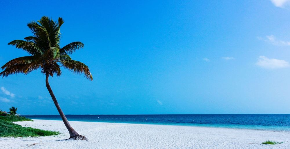 Palm Tree Sea Horizon Over Water Water Beach Sky Tranquil Scene Tranquility Scenics Tree Blue Tree Trunk Beauty In Nature Sand Solitude Travel Destinations Nature Tourism Growth Seascape Travel Photography Rickeherbertphotography Live For The Story The Great Outdoors - 2017 EyeEm Awards Been There.