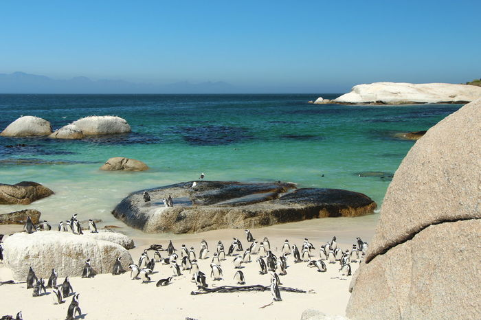 Cape of good hope - South Africa Animals Beach Cape Agulhas  Cape Town Clear Sky Dreaming Penguin Pinguin Rare Sand Sand & Sea South Africa Sun Waves Wildlife Wildlife & Nature