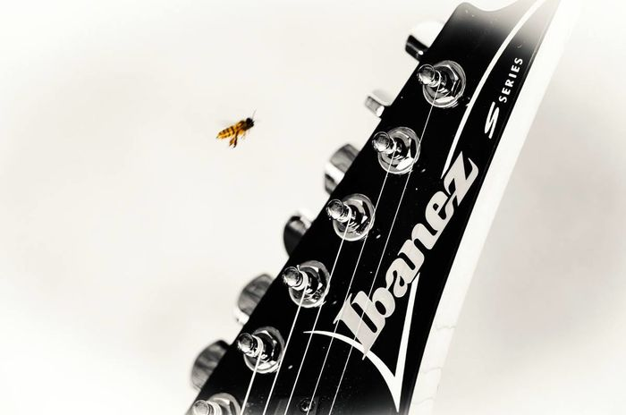 even the bee loves this guitar. lol Bee Blackandwhite Guitar Ibanez Music Musician Nikon D7000 Still Life