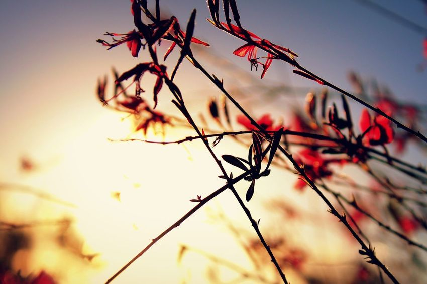 What Autumn Feels Like Plant Branch Tree Sky Low Angle View Nature Beauty In Nature Flower Close-up