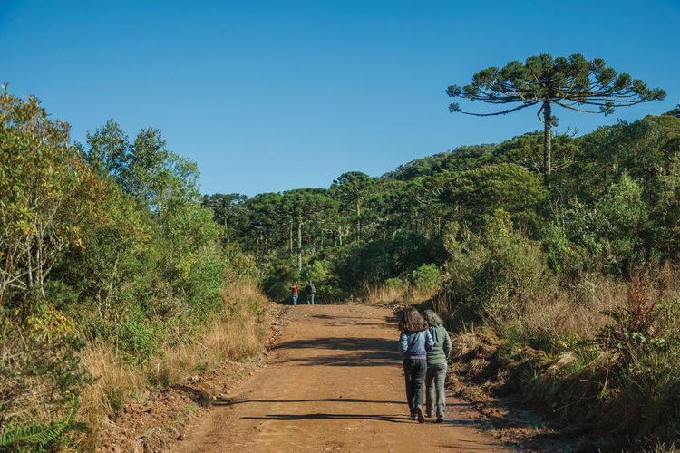 Rear view of girls walking on road amidst trees against clear blue sky