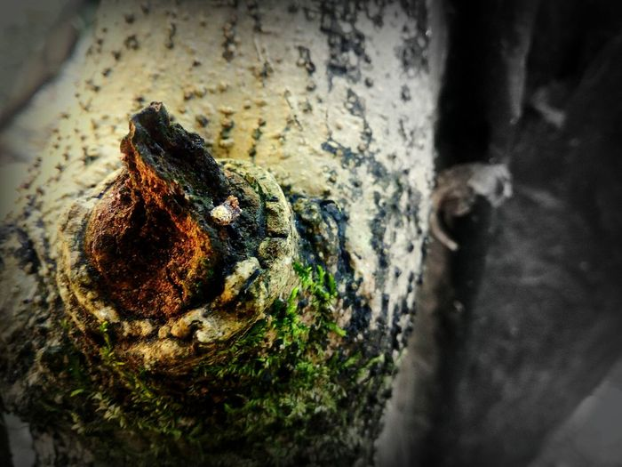 Close-up No People Outdoors Horizontal Likesforlikes Like4like The Week On Eye Em Nature Photography Nature On Your Doorstep Tree Patterns Different Points Of View Tree Wood Dry Wood Treescape Beauty In Nature Faded Beauty Macro Photography Wooden Structure Tree Stem EyeEm Best Shots Likeforlike The Week On EyeEm Dry Forest