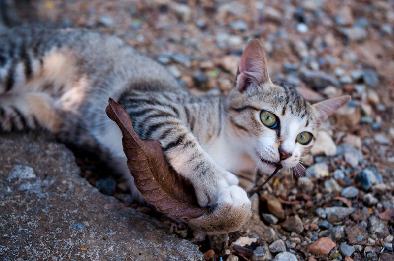 Portrait of cat lying on rock