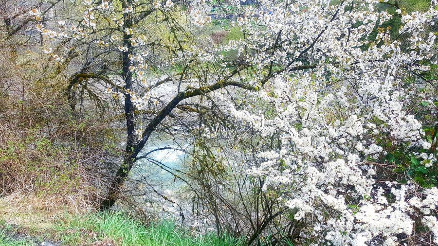 Full Frame Day Nature Growth No People Outdoors Plant Low Angle View Beauty In Nature Tree Grass Freshness Spring Flowers Springtime Zagori Vovousa