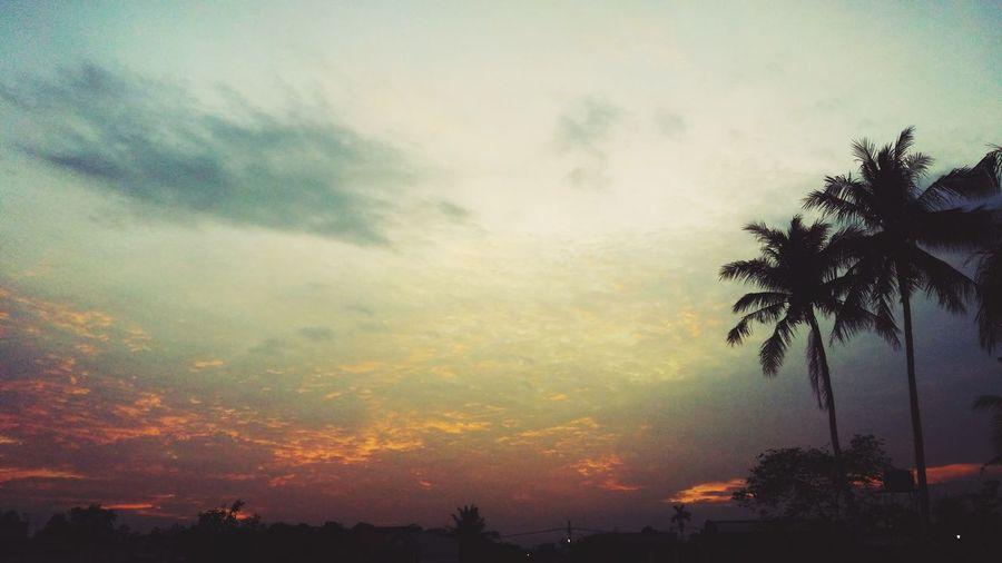 Tree Palm Tree Sunset Cloud - Sky Silhouette No People Nature