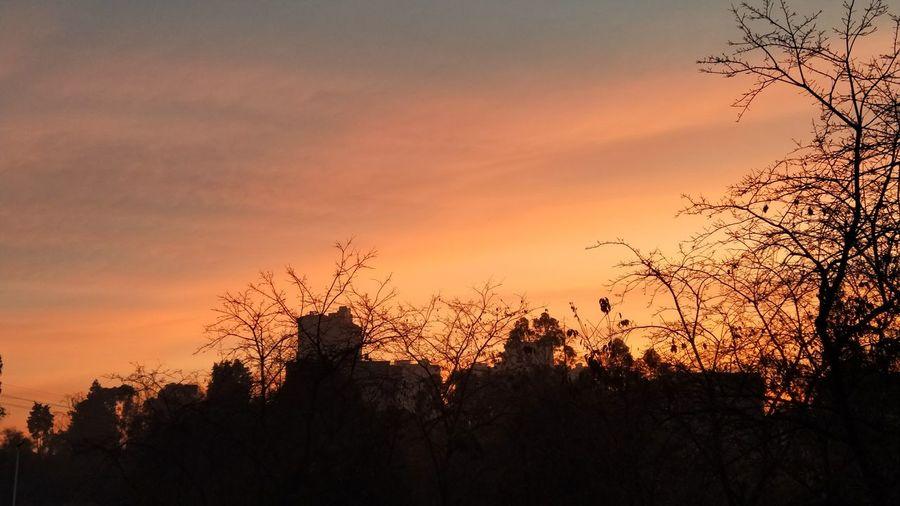 The sun Silhouette Sunset No People Tree Sky Nature