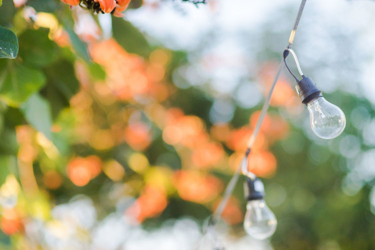 Close-up of light bulb hanging on tree