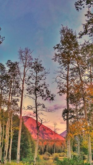 Sunset Beauty...On The Mountain... Tree Sky Outdoors No People Low Angle View Nature Beauty In Nature Rustic Mountain Life In The Mountains Popular Photographs The Week On EyeEm Check This Out! EyeEm Gallery Beautiful Nature Point Of View Journey Photography Nature Pink Color Sunset Sunset Lovers Excellent View Excellent Day Excellent Shot Campinglife Paint The Town Yellow