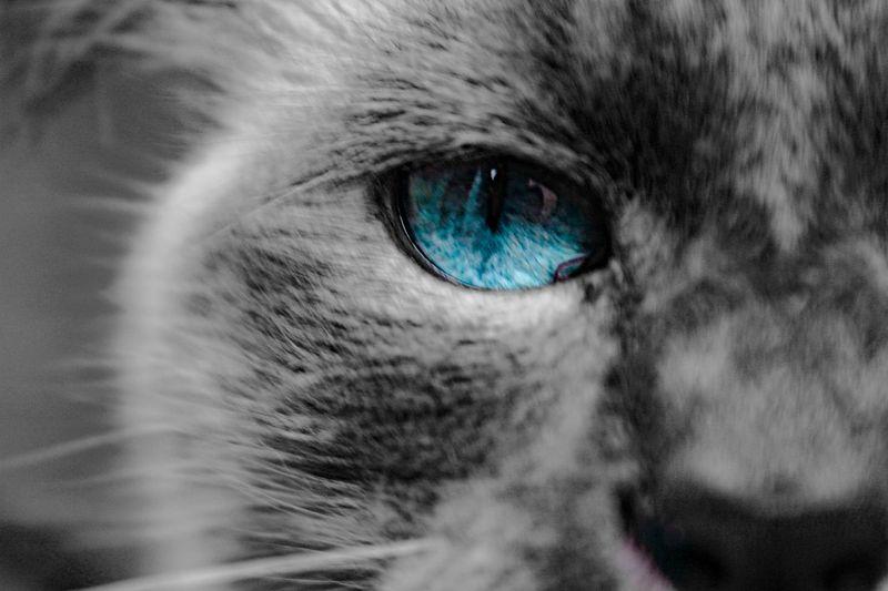 #cat #Cats #gatos #pet #Mascota #animal #canon Photography #Canon #canonphoto #photography #photo