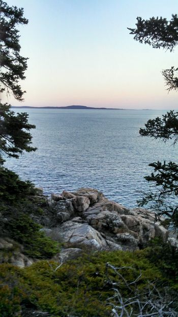 Tree Water Tranquil Scene Scenics Horizon Over Water Seascape Landscape Wilderness Sunset Solitude Beauty In Nature Calm Acadia National Park Maine From My Point Of View EyeEm Nature Lover Smartphonephotography Mobile Photography Lobuephotos EyeEm Masterclass Eeyem Photography EyeEm Gallery Nature Through My Lens EyeEm Best Shots