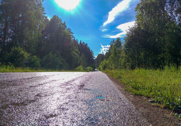 Surface level of road amidst trees against sky