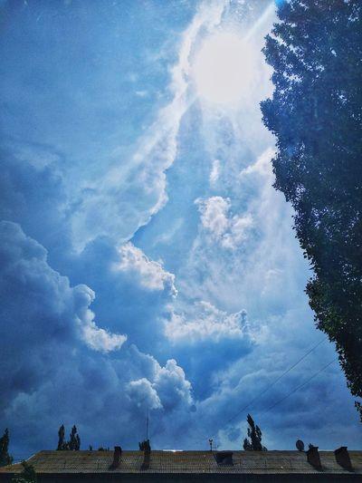 Tree Blue Rural