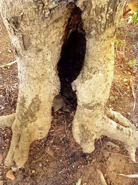 Critter Critterspace Critter Home Critter Rest Stop Critter Hotel Critter Shelter Textured  Nature Outdoors Day Tree Trunk Close-up Tree No People Beauty In Nature Critter Hotel Photography