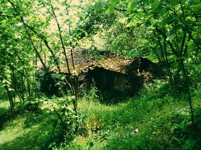 Plants and old abandoned house in forest