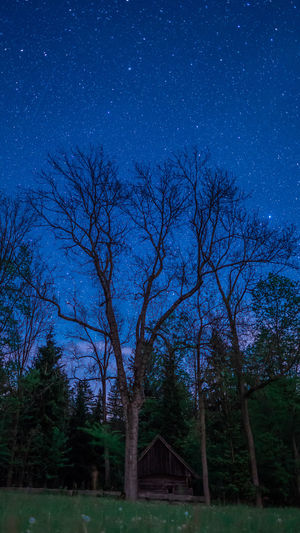 Tree Sky Night Plant Star - Space Scenics - Nature Nature Blue No People Land Tranquility Tranquil Scene Beauty In Nature Star Bare Tree Outdoors Architecture Astronomy Field Landscape Dark Moonlight