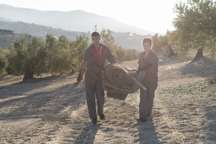 Farm workers working together at orchard during sunset