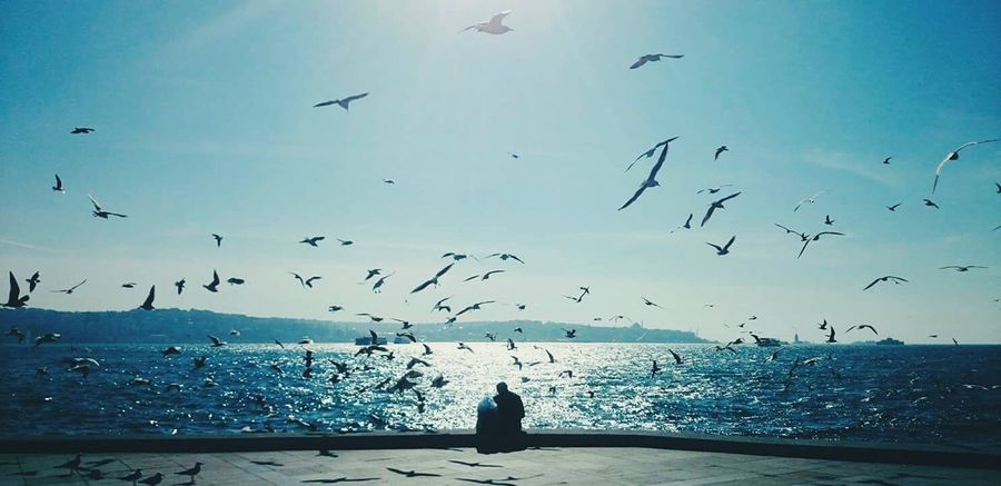 Flying Bird Flock Of Birds Large Group Of Animals Sea Beach Animal Wildlife Sky Animal Themes Animals In The Wild Outdoors Scenics Tranquility No People Nature Cloud - Sky Vacations Beauty In Nature Day