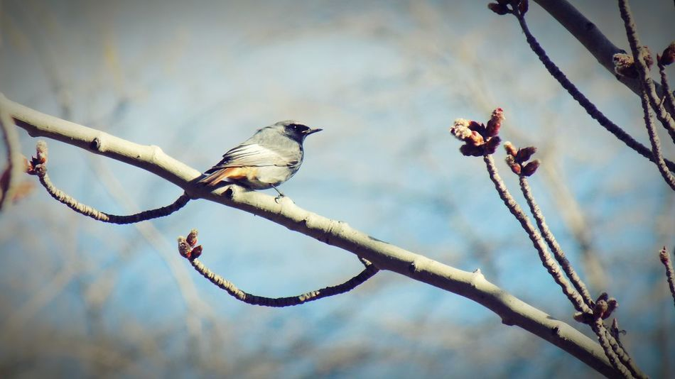 In The Trees In Tree Branch Bird Photography Birds_collection Birds Of EyeEm  Bird Perching Tree Branch Spread Wings Animal Themes Sky