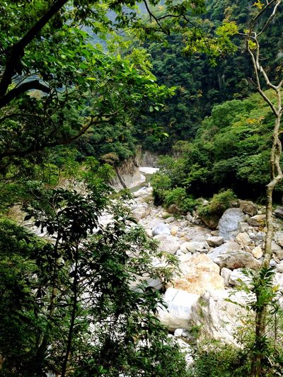Valley Rock Trees Hualien, Taiwan The View And The Spirit Of Taiwan 台灣景 台灣情