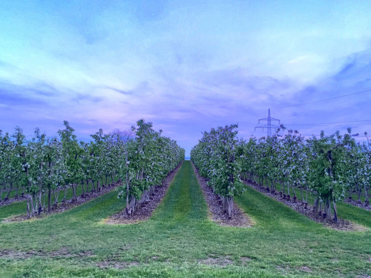 Scenic View Of Orchard Against Cloudy Sky