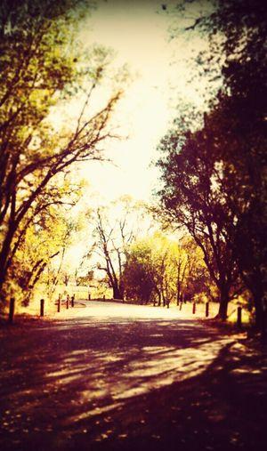 EyeEm Nature Lover Rossmorepark Quitewalks Loudthougts