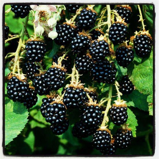 Blackberries Fruits Blackberry Bogurtlen