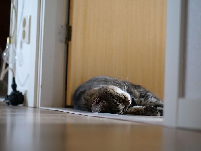 Cat sleeping on floor at home