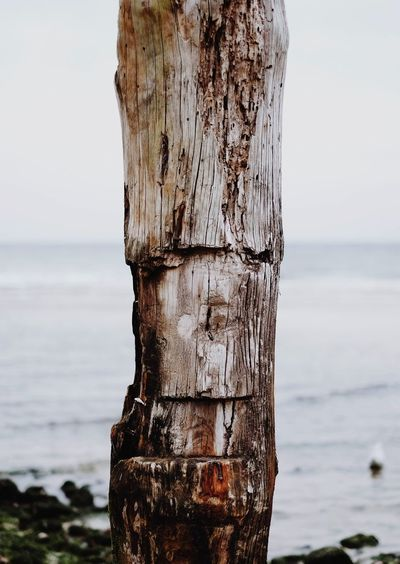 Close-Up Of Wood Against Sea