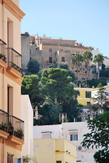 View into Dalt Vila No People Palm Trees Dalt Vila EyeEm Selects City Cityscape Tree Apartment Clear Sky Residential Building House Façade Sky Architecture Townhouse Low Old Town Balcony Urban Skyline Residential Structure Town Residential District General View Tiled Roof  TOWNSCAPE 2018 In One Photograph Moments Of Happiness It's About The Journey 17.62° My Best Photo Streetwise Photography