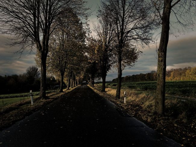 Autumn Farm Bare Tree Beauty In Nature Claudetheen Diminishing Perspective Fall Landscape Nature Road Street The Way Forward Tree Vintage