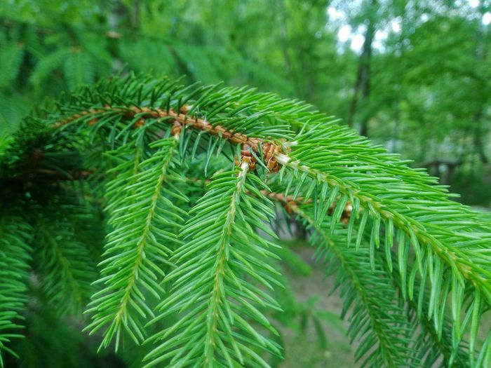 Close-up of green insect on pine tree