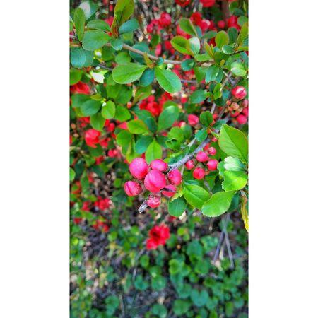 꽃 Snap Daliy Gpro2 일상 Flower 봄 Spring