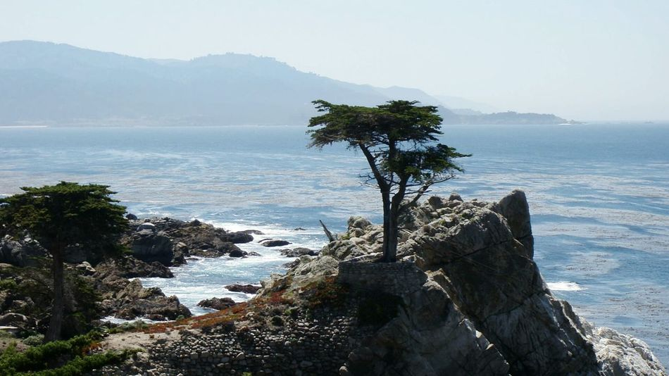 The Lone Cypress 17-Mile Drive Scenic View Scenic Road Pebble Beach California Tree_collection  EyeEm Best Shots The KIOMI Collection