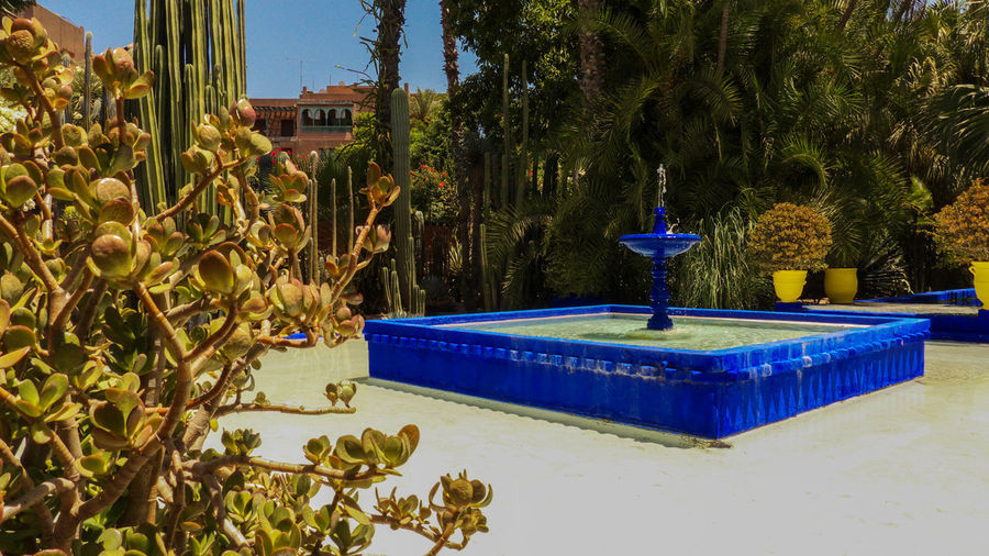 Jardin Majorelle - Marrakesh Fountain Majorelle Marrakesh Morocco Nature Bleu Bleu Majorelle Blue Garden Jardin Jardin Majorelle Maroc Marrakech Outdoors Pool Water