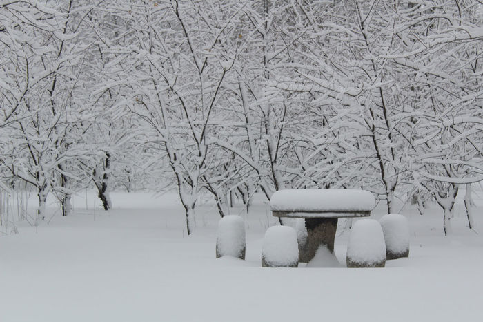 Snow Cold Temperature Winter White Color No People Nature Silence Snowing Outdoors Beauty In Nature Snowdrift Tree Snowflake Day