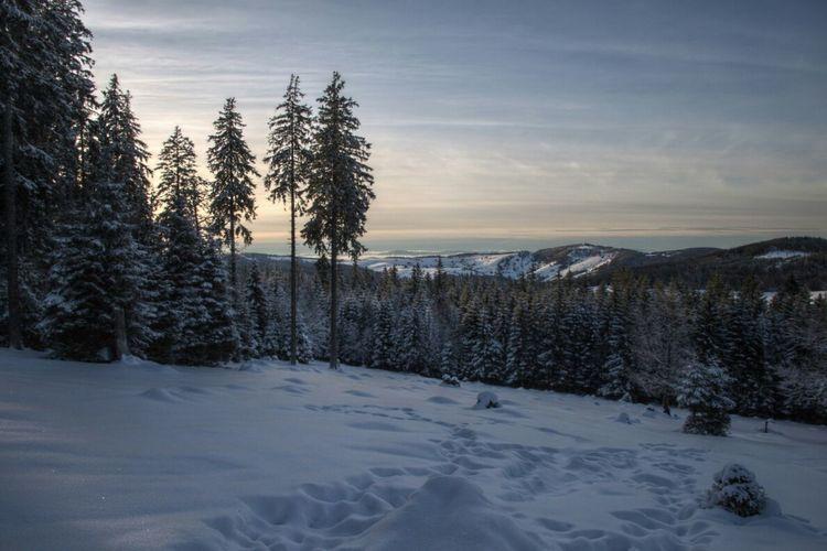 Hochschwarzwald Blackforest Hiking Snow clearing