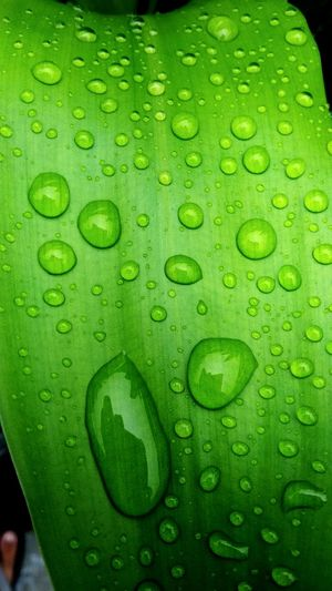 water n leaf Splashing Droplet Water Futuristic Backgrounds Concentric Textured  Full Frame Drop Wet Liquid RainDrop Transparent Purity Dew Rainy Season