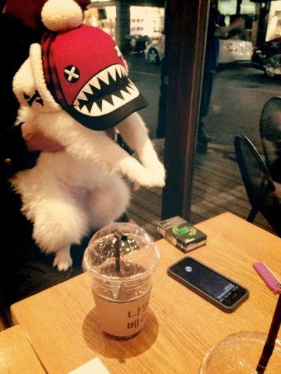 논현동 나띵베러 Cute Cute Pets