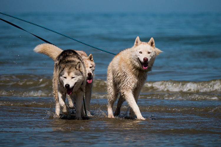 View of two dogs in sea